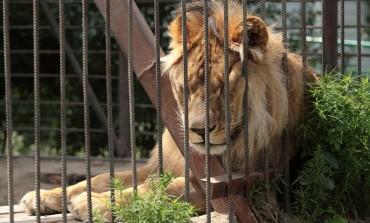 Trafic d'animaux : un fléau meurtrier que le monde combat