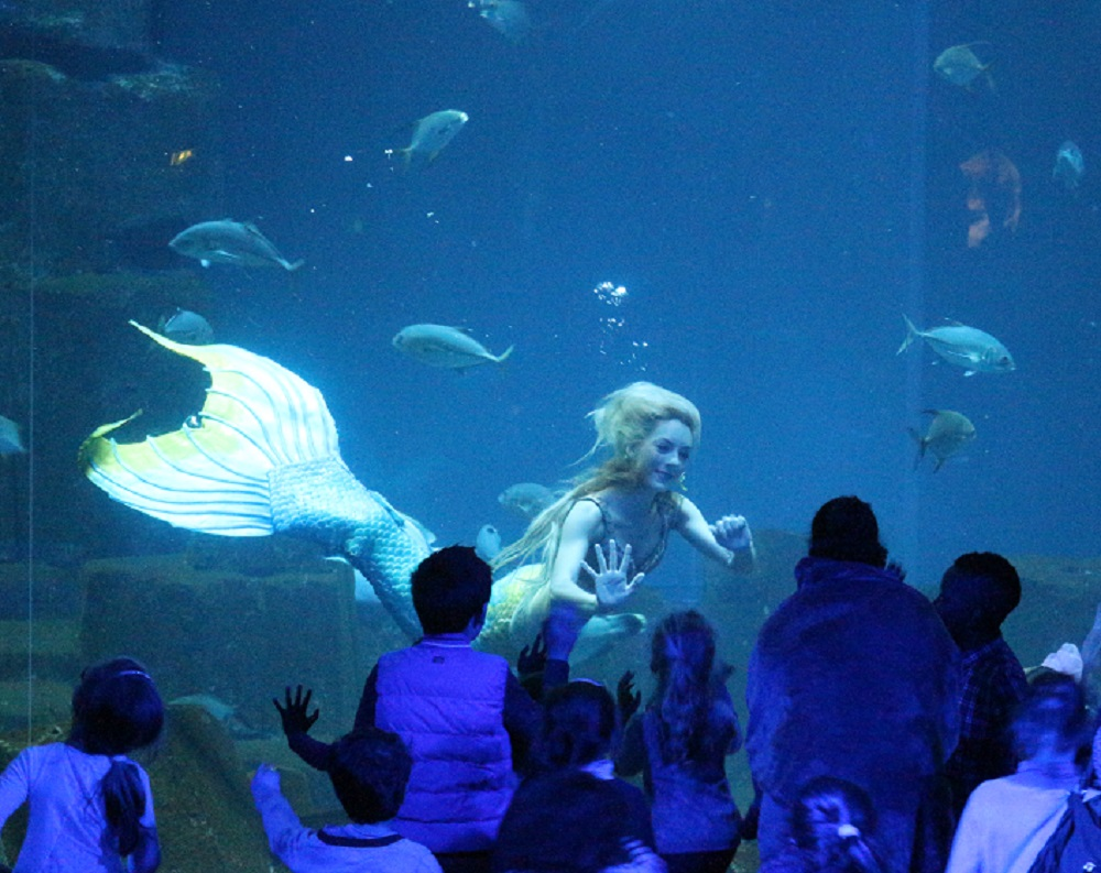 Claire la sirène a un spectacle aquatique à son nom à l'aquarium de Paris. Photo : Lucie Martin